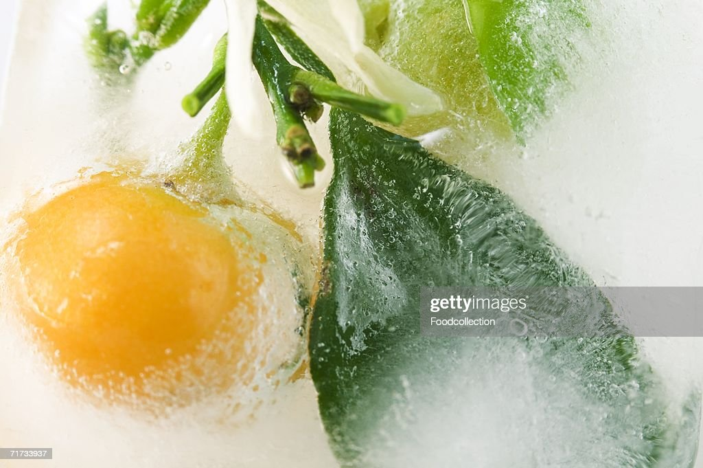 Frozen citrus fruit with leaves : Stock Photo