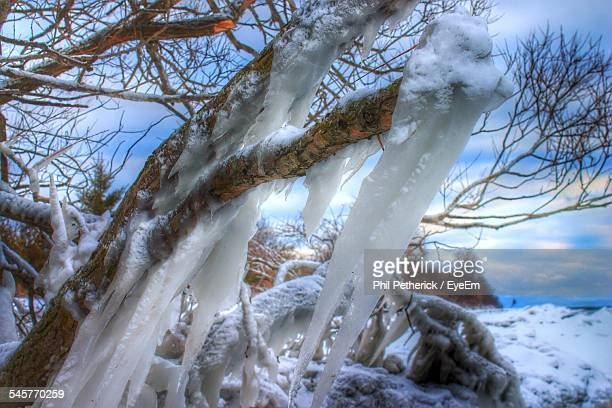 Frozen Fallen Tree During Winter