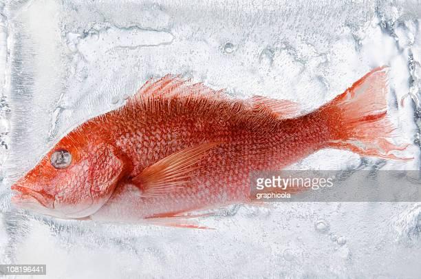 Frozen fish in ice