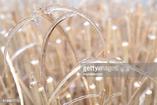 Frozen Grass : Stock Photo