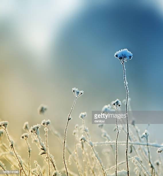 Frozen grass stands tall despite the winter weather