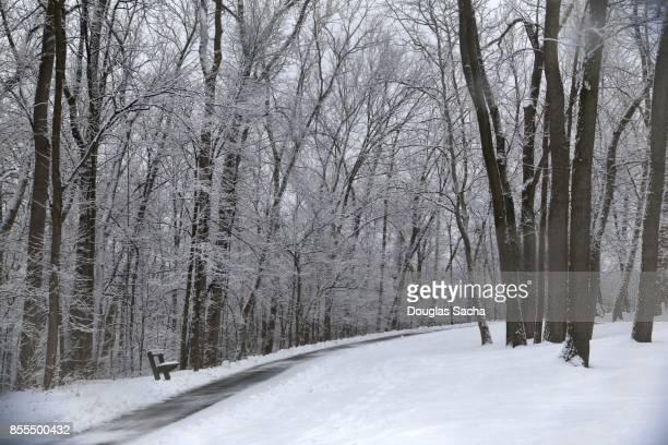 Frozen Landscape along a nature trail