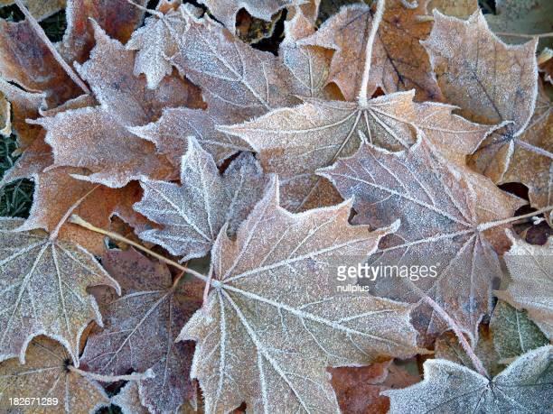 frozen leaves #2