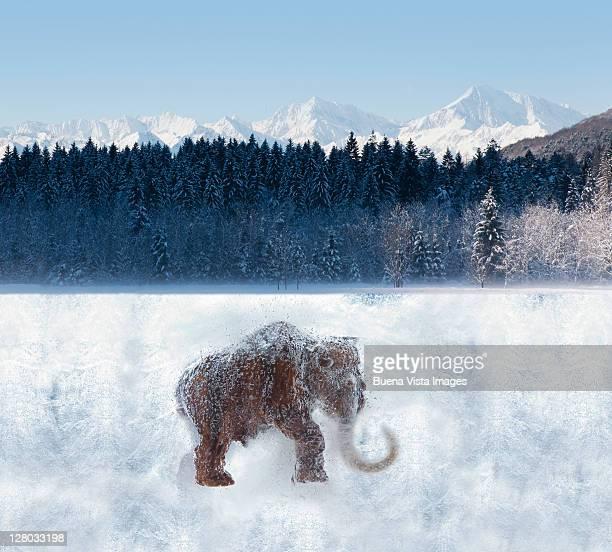 Frozen mammoth under a forest