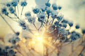 Frozen meadow plant, natural vintage winter  background, macro image with sun shining