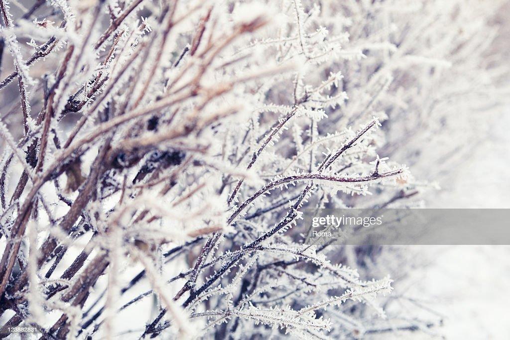 Frozen : Stock Photo