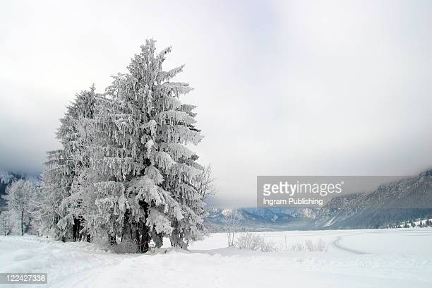 Frozen trees, Lake Bled, Slovenia.