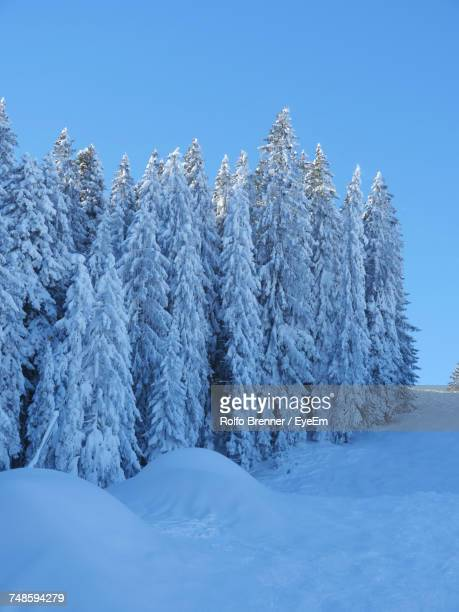 Frozen Trees On Snowcapped Mountain Against Sky