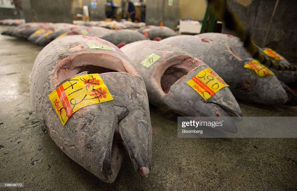 Frozen tuna are laid out following the year's first auction at Tsukiji Market in Tokyo, Japan, on Saturday, Jan. 5, 2013. Kiyomura K.K., a Tokyo-based sushi chain operator, outbid rivals for a second year in a row for the most expensive fish ever sold at the market, saying the purchase may help improve Japan-China relations. Photographer: Noriyuki Aida/Bloomberg via Getty Images