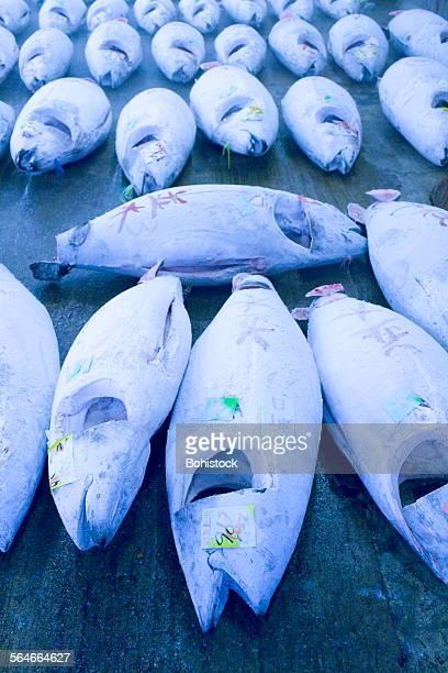 Frozen tuna at auction