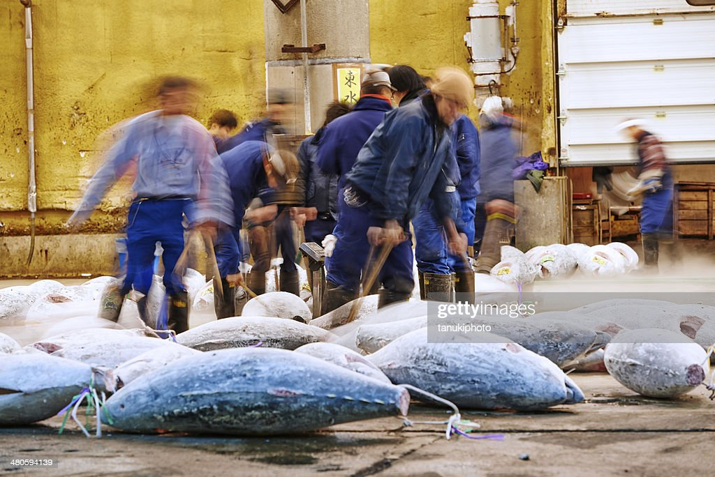 Frozen Tuna at Tsukiji Fish Market : Stock Photo