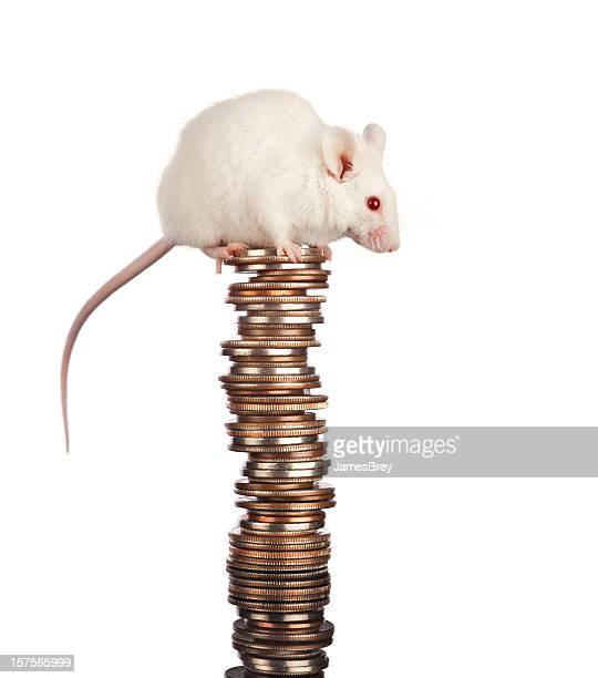 Frugal Little White Mouse Saving a Big Stack of Money