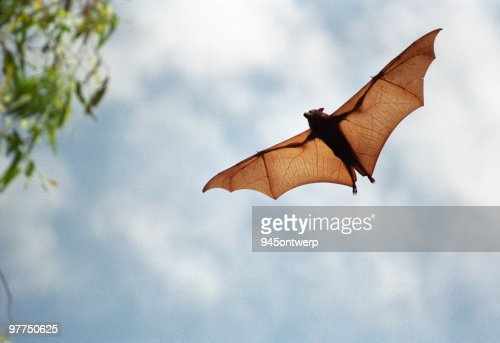 Devil bat / персонаж