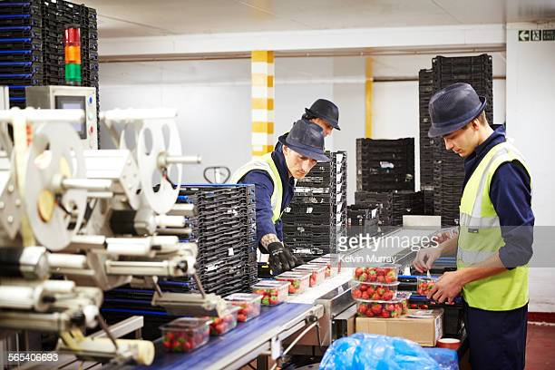 Fruit packers sort fruit for distribution to shops