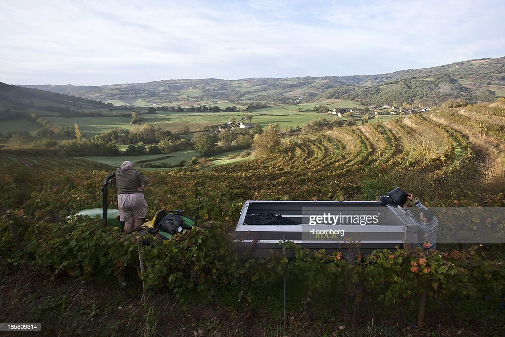 A fruit picker empties a bucket of fer servadou grapes into a tractor-drawn trailer during the harvest at Jean-Luc Matha's vineyard in Clairvaux, France, on Wednesday, Oct. 23, 2013. France's stocks of wine fell to the lowest in at least 12 years after the country's production plunged 19 percent last year, crop office FranceAgriMer said. Photographer: Balint Porneczi/Bloomberg via Getty Images
