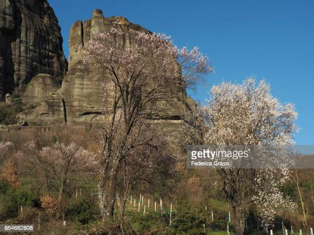 Fruit Trees In Full Bloom At The Meteora, Greece