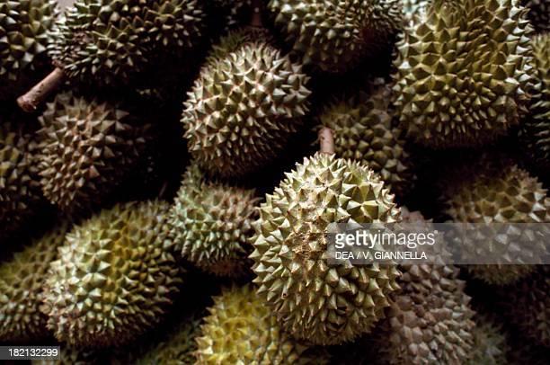 Fruits of the Durian Malvaceae Botanical Gardens Singapore