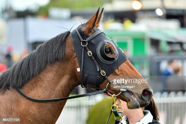 Fuhryk after winning the Carlton Draught Alinghi Stakes at Caulfield Racecourse on October 21 2017 in Caulfield Australia