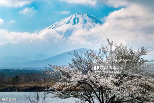 Fuji and Sakura