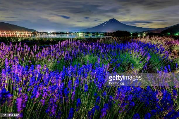 Fuji Mountain and Lavender Field at Night, Kawaguchiko Lake