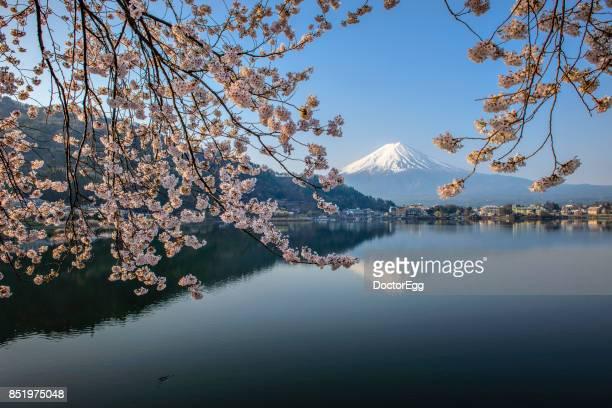 Fuji Mountain and Sakura at Kawaguchiko Lake