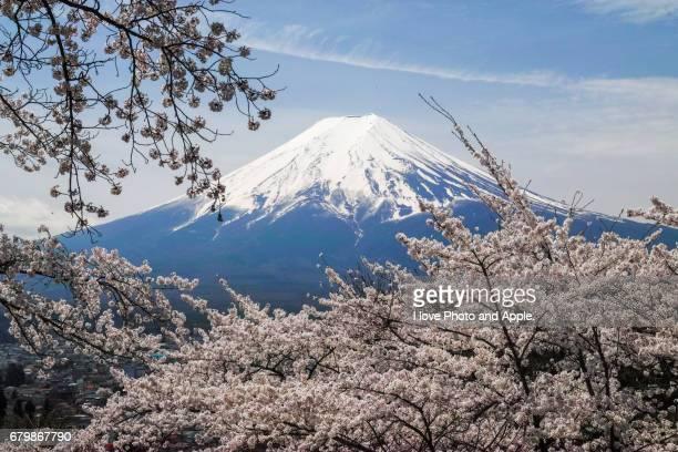 Fuji spring view
