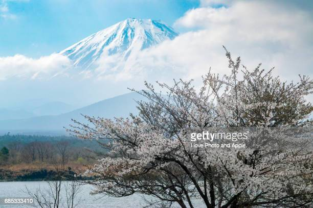 Fuji view of spring