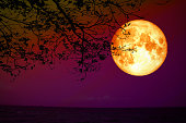 full blood moon back silhouette dry tree red night sky over sea, Elements of this image furnished by NASA