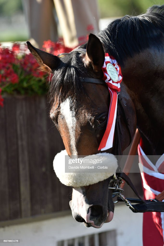 Full Drago after victory in the Grand Prix in Milan on June 18, 2017 in Milan, Italy.