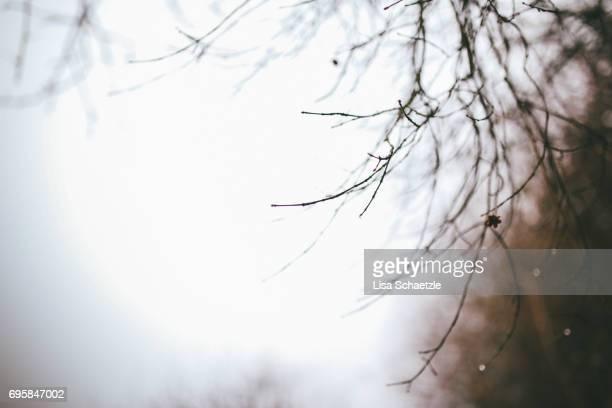 Full frame background winter
