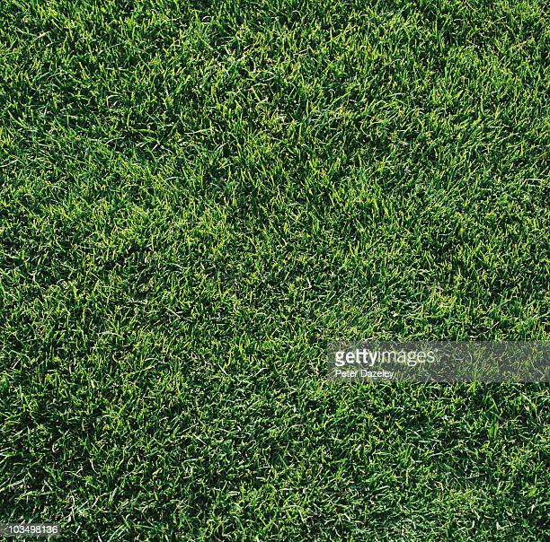 Full frame grass background 1