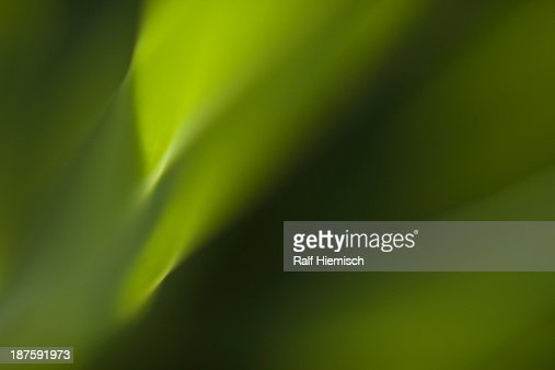 Full frame macro abstract of flower leaf