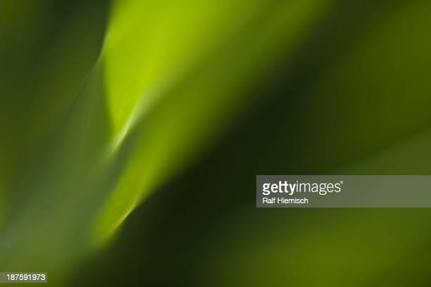 Full frame macro abstract of flower leaf