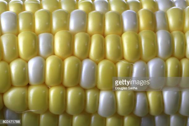 Full frame of Corn (zea mays)