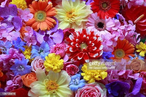 Full Frame of Flowers