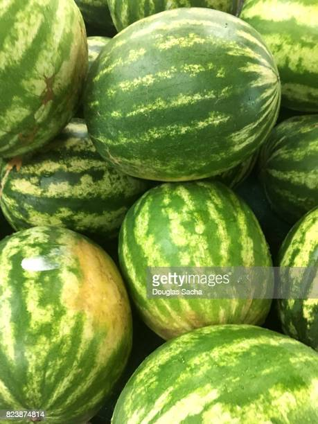 Full frame of freshly picked Watermelon's (Citrullus lanatus)