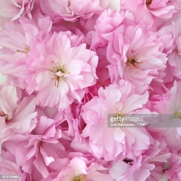 Full frame of pink flower