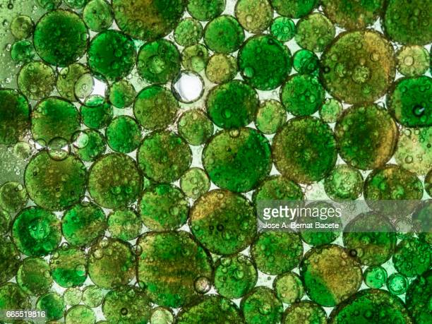 Full frame of the textures formed by the bubbles and drops of oil in the shape of circle floating on a green colors background
