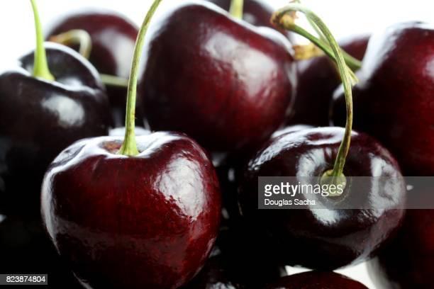 Full frame of Wild Cherries (Prunus avium)