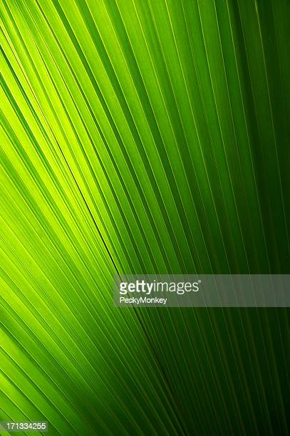 Full Frame Palm Frond Background Sun and Shadow