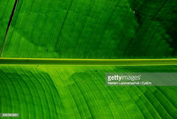 Full Frame Shot Of Banana Leaf