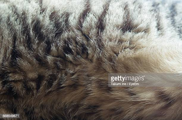 Full Frame Shot Of Cat Hair