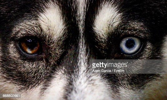 Full Frame Shot Of Dog With Two Colored Eye