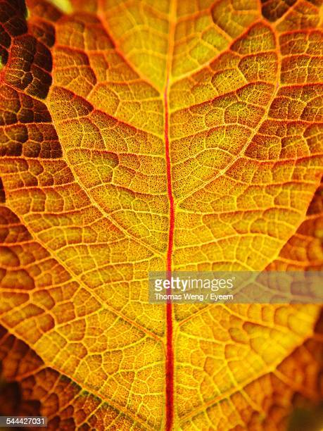 Full Frame Shot Of Dry Leaf