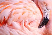 Full Frame Shot Of Flamingo