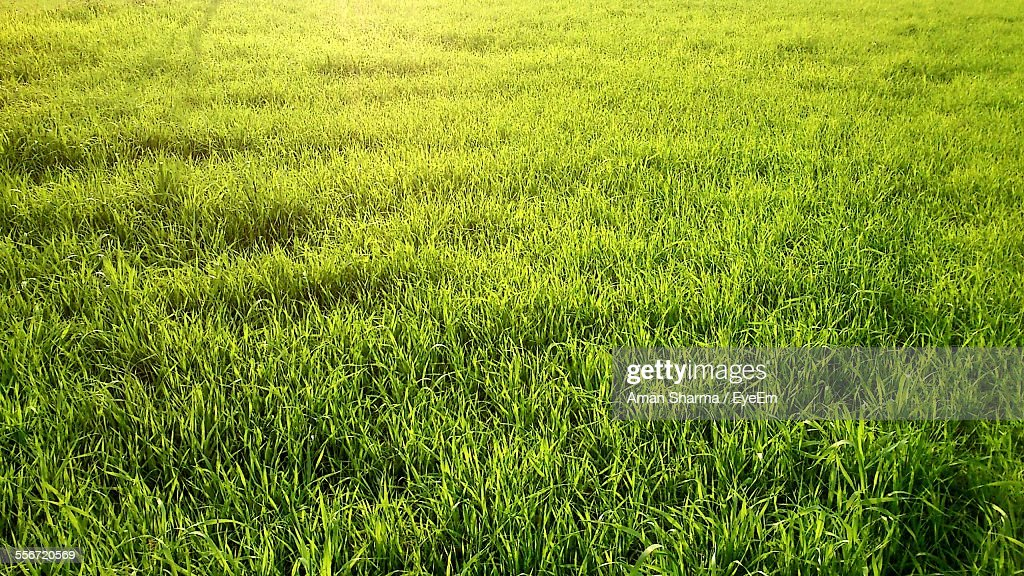 Full Frame Shot Of Grassy Field