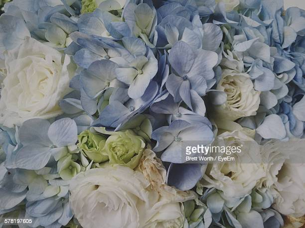 Full Frame Shot Of Hydrangeas And Roses Blooming Outdoors