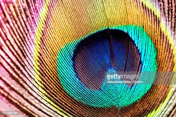 Full Frame Shot Of Peacock Feather