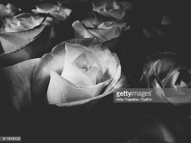 Full frame shot of roses