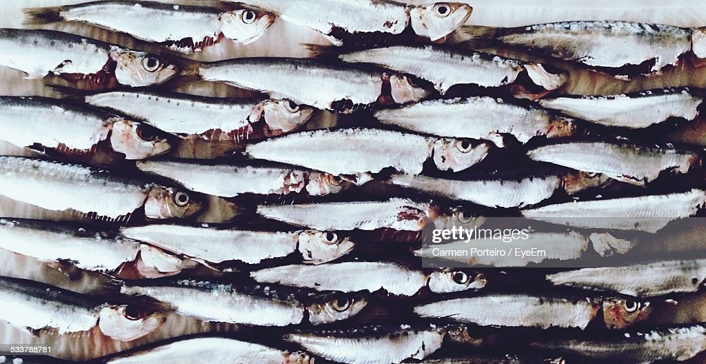Full Frame Shot Of Small Sardines